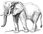 African_elephant_(PSF)